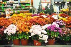 Home improvement store. Koçtaş, home improvement store, garden section royalty free stock photos