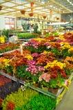 Home improvement store. Koçtaş, home improvement store, garden section stock photo