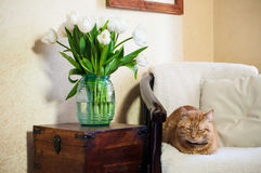 Home interior, cat. Sleeping in an armchair, a wall and a bouquet of white tulips Stock Photography