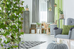 Home interior with decorative ivy. Green armchair and industrial wardrobe Royalty Free Stock Photo