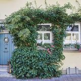 Home with ivy plant, Bamberg, Germany Stock Image