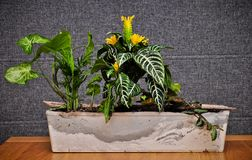 Home jungle in homade planter stock photography