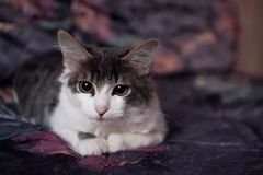 Home kitten lying on the bed stock photos
