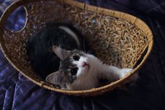 Home kitten sitting in the basket royalty free stock photo
