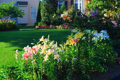 Home Landscaping. With colorful lily flowers and green lawn in the morning Stock Photography