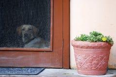 HOME local em belize Imagem de Stock