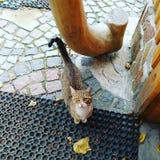 Cat wood stock photos