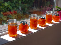 Home made apricot jam. In small jars placed on a window sill in the sun Royalty Free Stock Photos