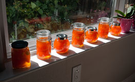 Home made apricot jam. In small jars placed on a window sill in the sun Royalty Free Stock Image
