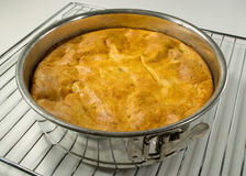 Home made baked cake in a springform Royalty Free Stock Images
