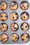 Home made Blueberry Muffins Royalty Free Stock Photo