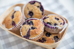 Home made Blueberry Muffins Royalty Free Stock Photos