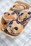 Home made Blueberry Muffins Royalty Free Stock Photography