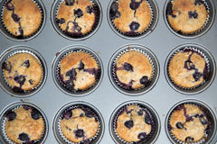Home made Blueberry Muffins Stock Photo