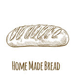 Home made bread. Hand drawn vector illustration stock illustration