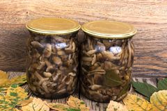 Home made cans. Glass jars with pickled mushrooms. Studio Photo Royalty Free Stock Photo