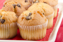Home made chocolate chip muffin Royalty Free Stock Photography