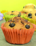 Home made chocolate chip muffins Stock Image