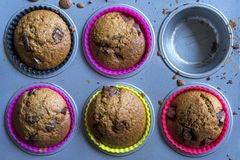 Home made muffins Royalty Free Stock Photo