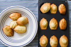 Home made Madeleine cookies on plate and in baking dish Royalty Free Stock Photo