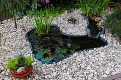 The home made pond with stones. The home made pond with white stones and some plants in the garden in front of house Royalty Free Stock Images