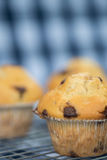 Home made tasty chocolate chip muffins on cooling rack Royalty Free Stock Photos