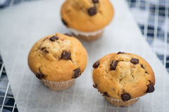 Home made tasty chocolate chip muffins on cooling rack Stock Photo