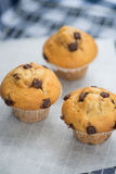 Home made tasty chocolate chip muffins on cooling rack Royalty Free Stock Images