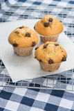 Home made tasty chocolate chip muffins on cooling rack Stock Photography