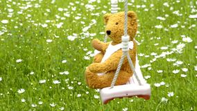 Home made teddy on a swing in a garden with marguerites. In spring stock video