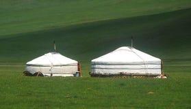 home mongolian Royaltyfria Bilder