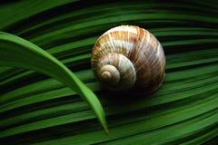 home natur Fotografering för Bildbyråer