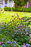 Home Perennial Garden Stock Photos