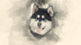 Home pet. Breed of Husky dog. Watercolor background Royalty Free Stock Images