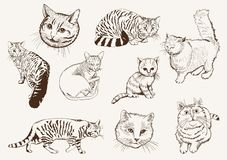 Home pet cat Stock Photos