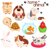 Home pet Royalty Free Stock Photography