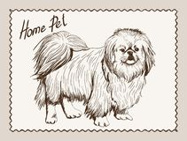 Home pet dog Stock Image
