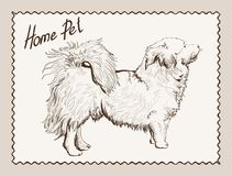Home pet dog Royalty Free Stock Photos