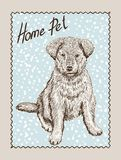Home pet dog Stock Images
