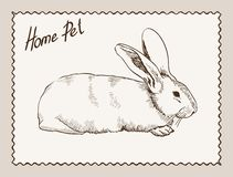 Home pet rabbit Royalty Free Stock Images