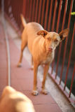 Home pets - family protection Royalty Free Stock Photography