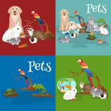 Home pets set, cat dog parrot goldfish hamster, domesticated animals Stock Photos