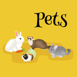 Home pets set, cat dog parrot goldfish hamster, domesticated animals Royalty Free Stock Images