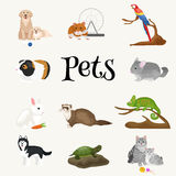 Home pets set, cat dog parrot goldfish hamster, domesticated animals Royalty Free Stock Image