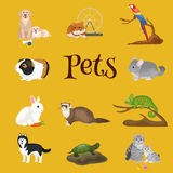 Home pets set, cat dog parrot goldfish hamster, domesticated animals Stock Photo