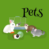 Home pets set, cat dog parrot goldfish hamster, domesticated animals Stock Images