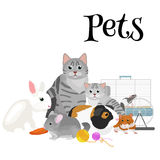 Home pets set, cat dog parrot goldfish hamster, domesticated animals Stock Image