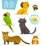 Home pets set isolated on white, cat dog parrot goldfish hamster ferret, cartoon vector illustration Royalty Free Stock Photo
