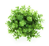 Home plant Stock Photography