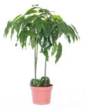 Home plant Stock Image